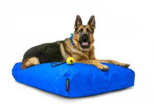 Pelech-pre-psa-Doggy-large-modrý-neon